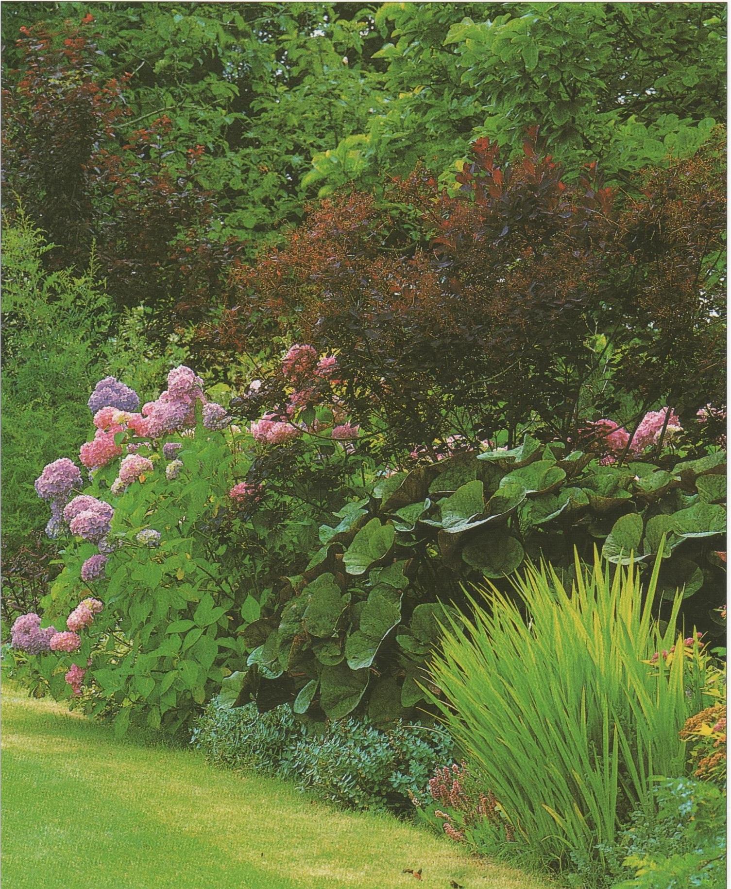 Quelles fleurs et plantes poussent à l\'ombre. Plantes de jardin pour ...